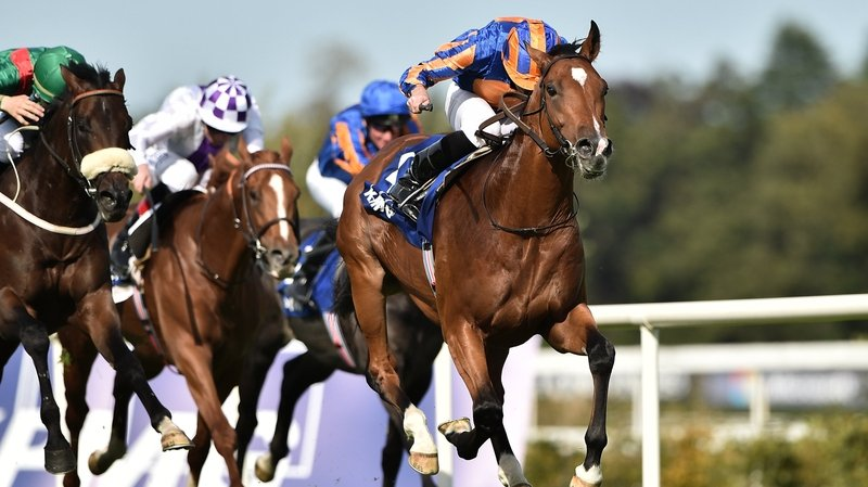 Mogul on target for the Breeder's Cup